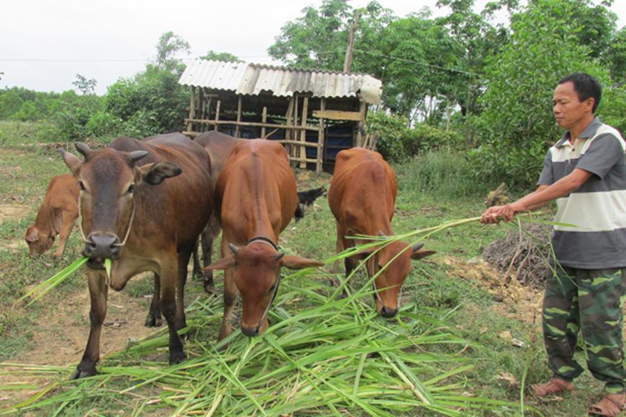 Trả lời bài toán chăn nuôi gì hiệu quả kinh tế cao giúp nông dân làm giàu