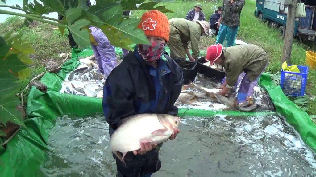 Cách chăn nuôi cá mang lại hiệu quả kinh tế cao cho người nông dân