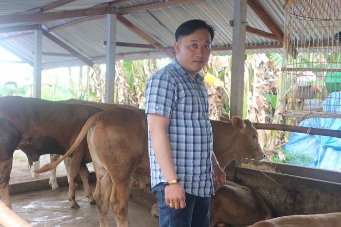 Anh Bùi Quốc Vững thành công từ chăn nuôi bò thịt
