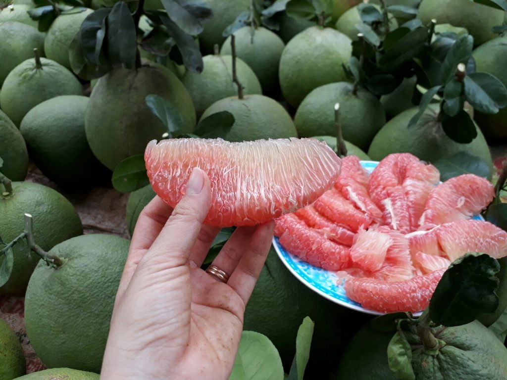 trồng cây ăn trái kinh tế cao