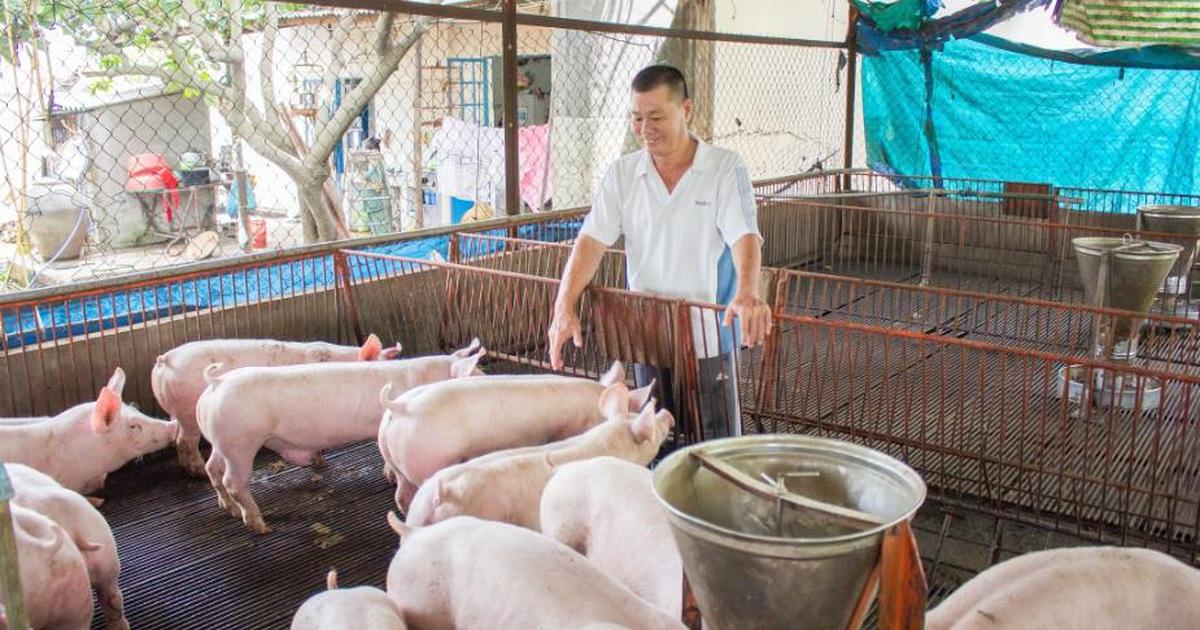 nuôi lợn bao lâu thì xuất chuồng
