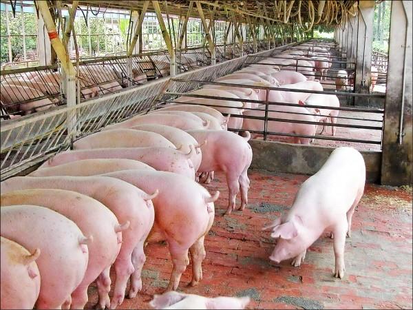 nuôi lợn thịt bao lâu thì xuất chuồng