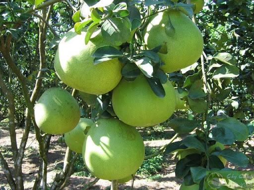 trồng cây gì hiệu quả kinh tế nhất hiện nay