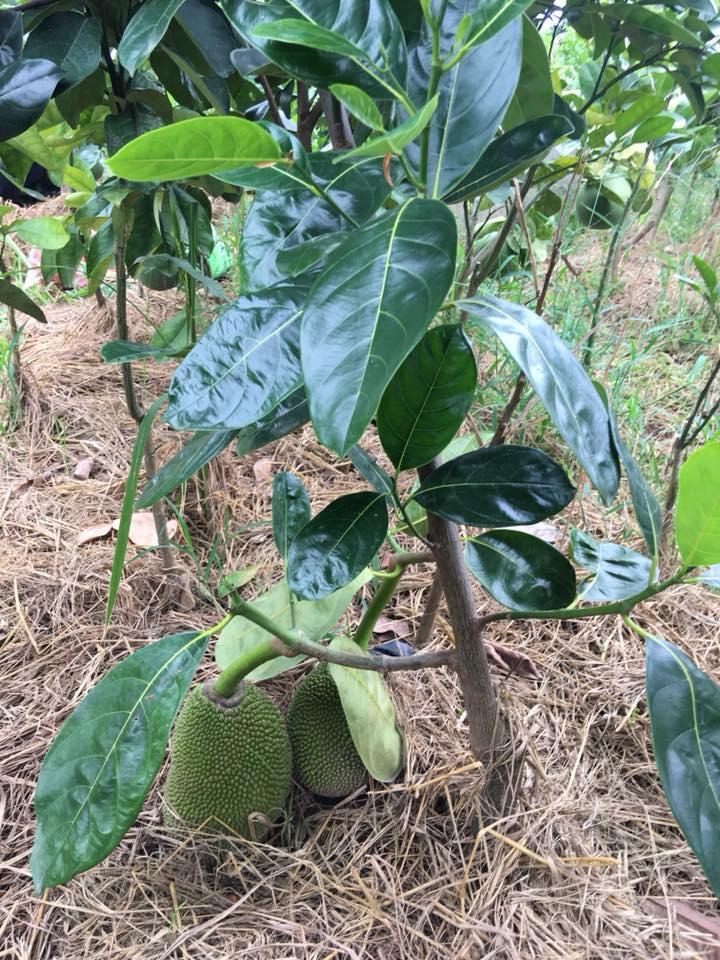 trồng cây gì kinh tế nhất