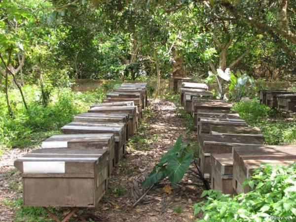 nuôi ong trong vườn cây ăn quả có lợi gì